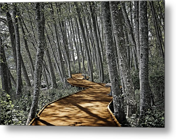Boardwalk In The Woods Metal Print