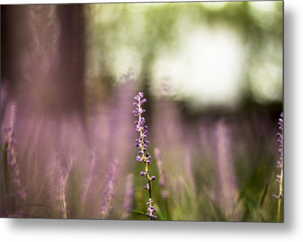 Bokeh With Purple Wildflower Metal Print