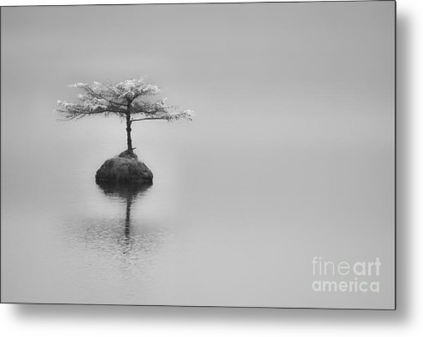 Bonsai At Fairy Lake Metal Print