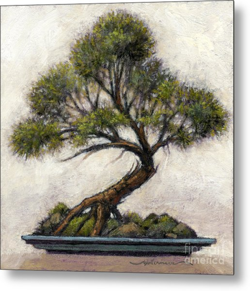 Bonsai Cedar Metal Print