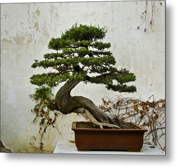 Bonsai Suzhou China Metal Print
