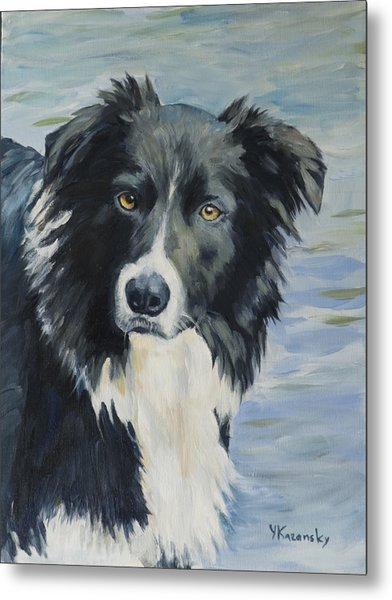 Border Collie Portrait Metal Print