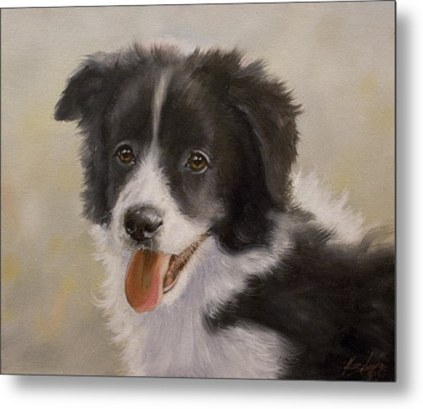 Border Collie Pup Portrait Iv Metal Print
