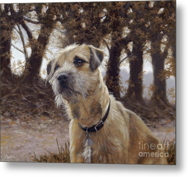 Border Terrier In The Woods Metal Print