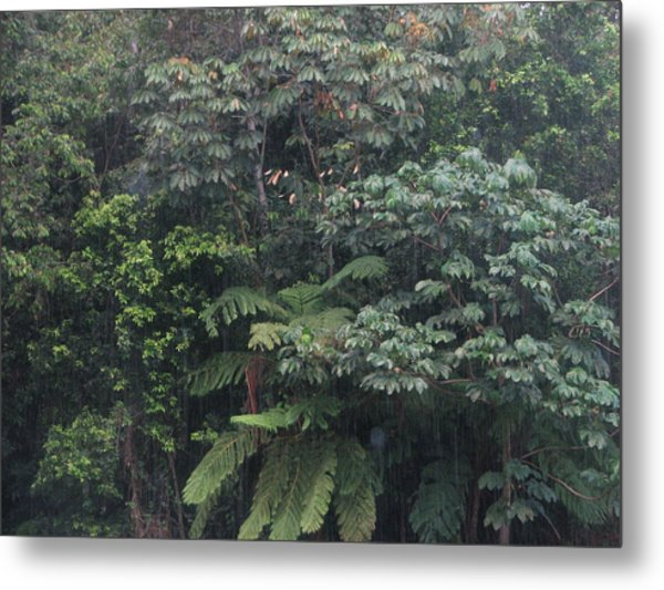 Bosque Metal Print