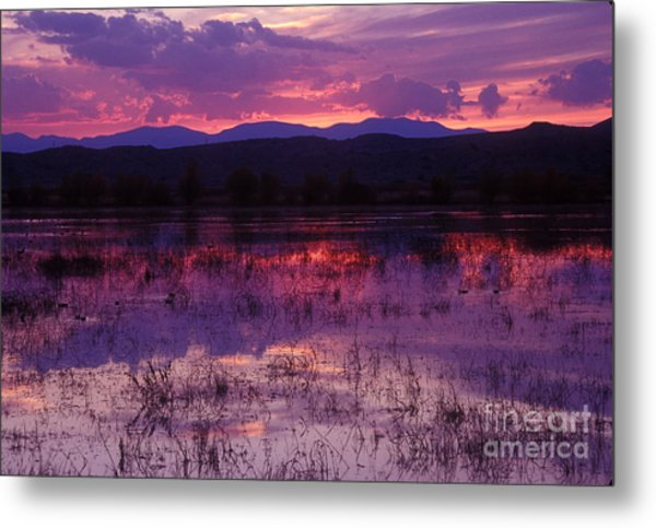 Bosque Sunset - Purple Metal Print
