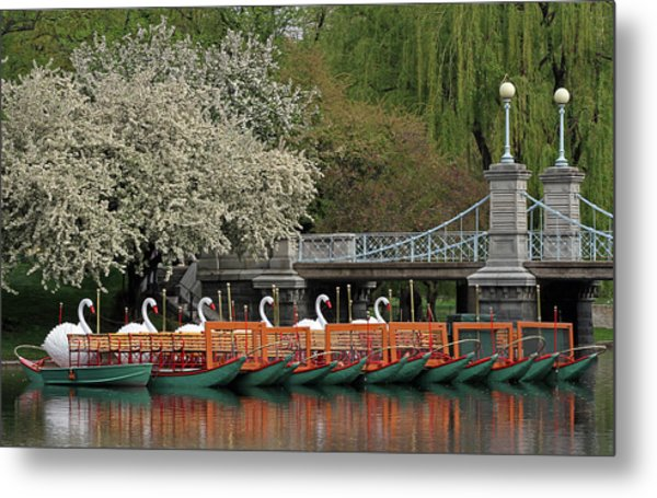 Boston Swan Boats  Metal Print