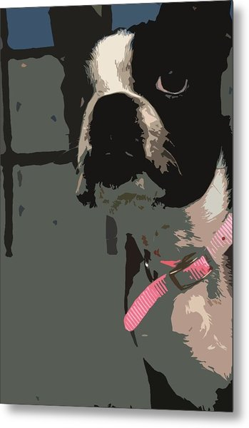 Boston Terrier Art01 Metal Print