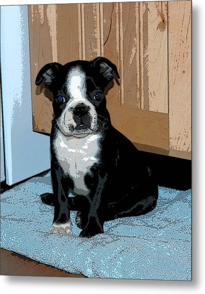 Boston Terrier Art02 Metal Print