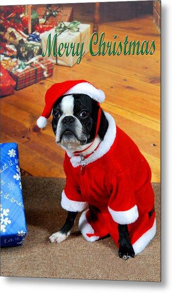 Boston Terrier Christmas Metal Print