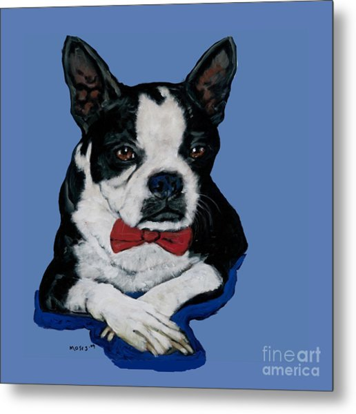 Boston Terrier With A Bowtie Metal Print