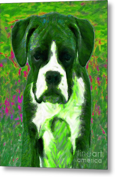 Boxer 20130126v3 Metal Print by Wingsdomain Art and Photography