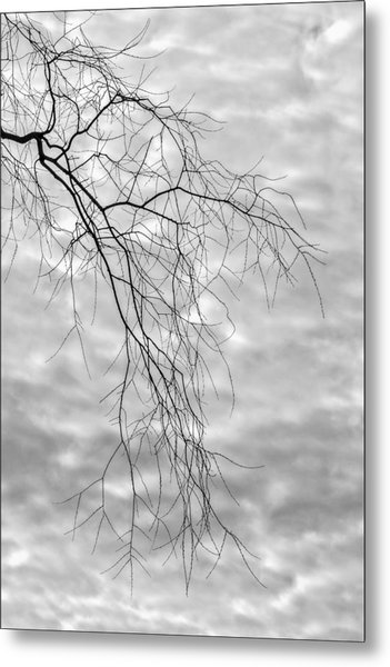 Branches And Clouds Metal Print by Robert Ullmann