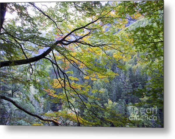 Branches And Leafs Metal Print