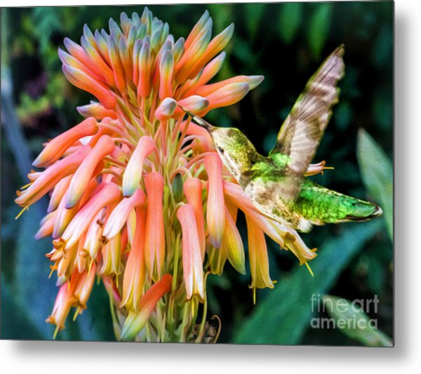 Breakfast For A Hummer Metal Print