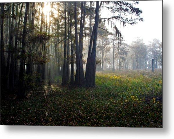 Breaking Through Morning Fog Metal Print