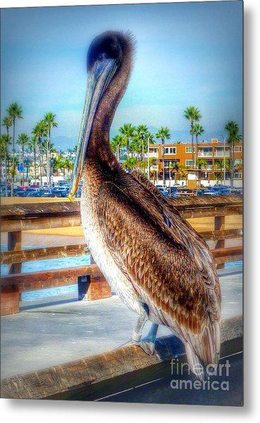 Brief Pelican Encounter  Metal Print