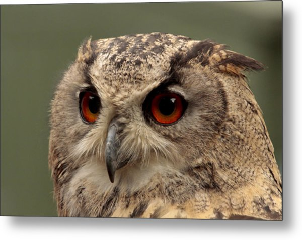 Bright Eyed Eagle Owl  Metal Print by Simon Gregory