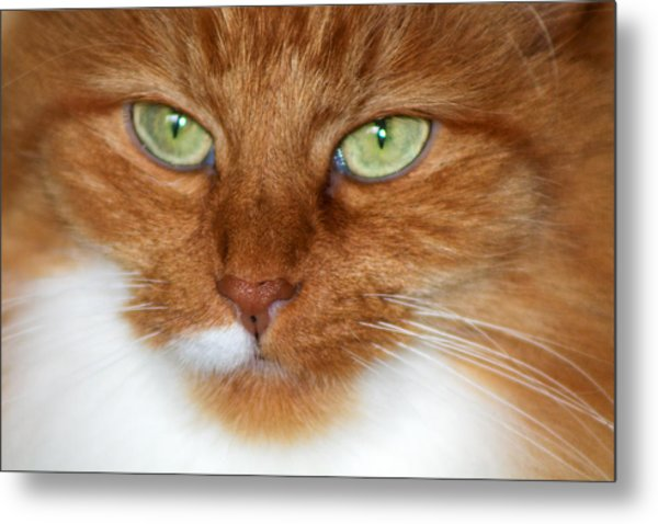 Bright Eyes Metal Print by Rhonda Humphreys