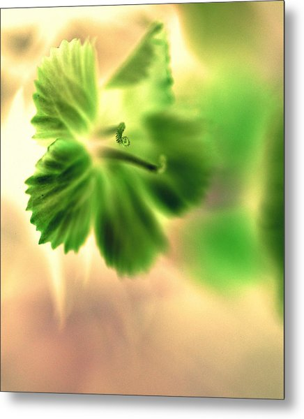 Bright One Metal Print
