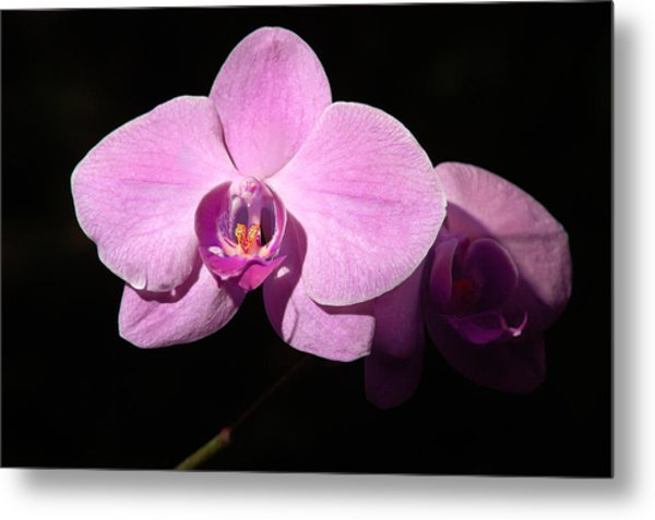 Bright Orchid Metal Print
