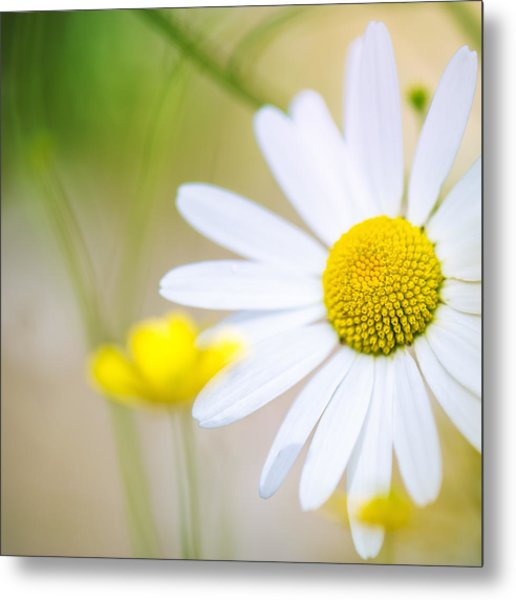 Bright Outlook Metal Print