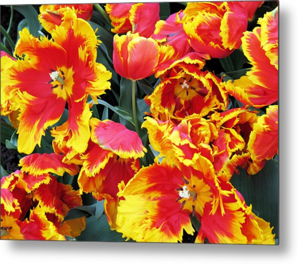 Bright Parrot Tulips Metal Print