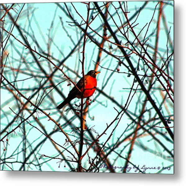 Bright Red Robin Metal Print