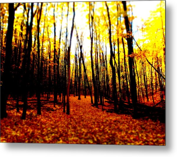Bright Woods Metal Print