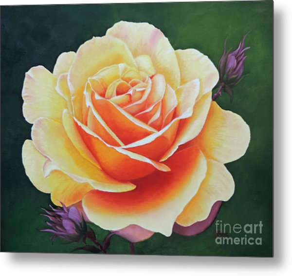 Brilliant Rose Metal Print