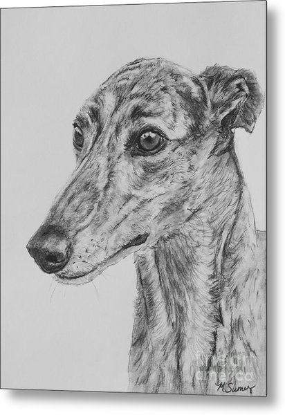 Brindle Greyhound Face In Profile Metal Print