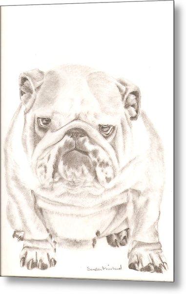British Bulldog Winnie Metal Print