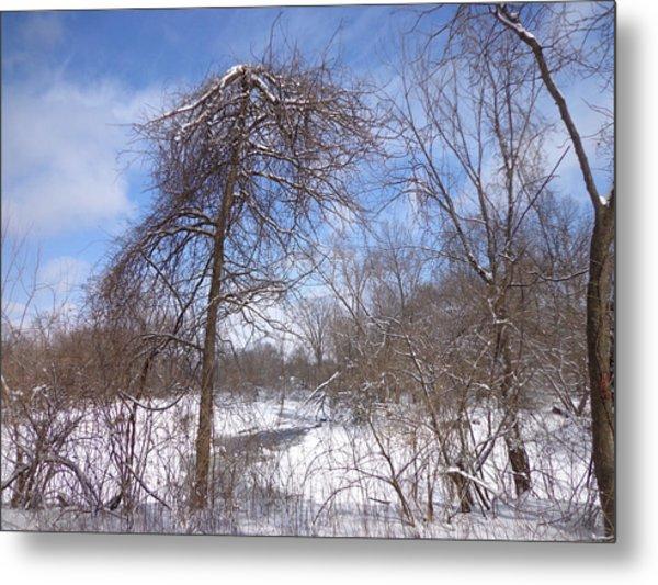 Broken Tree Metal Print by Jacque Hudson