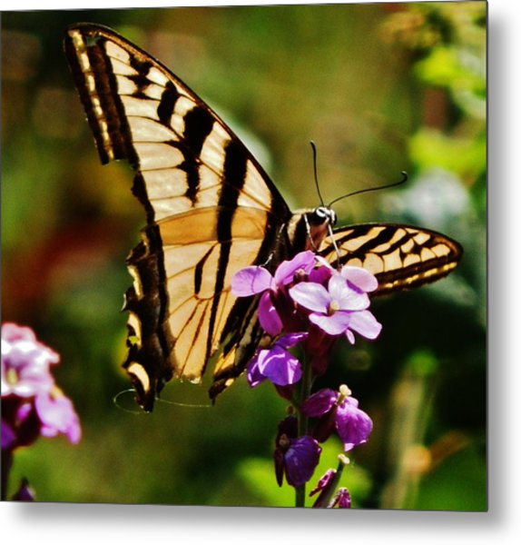 Broken Wing Metal Print