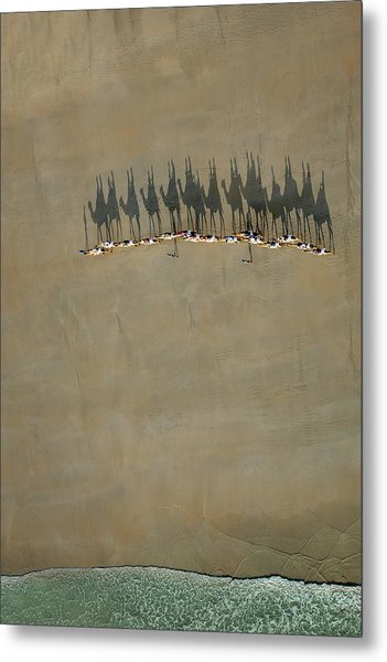 Broome Camel Train Metal Print by Renee Doyle