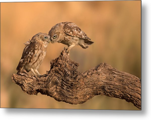 Brothers Forever Metal Print
