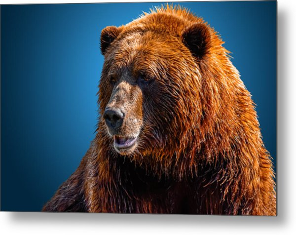 Brown Bear 2 Metal Print
