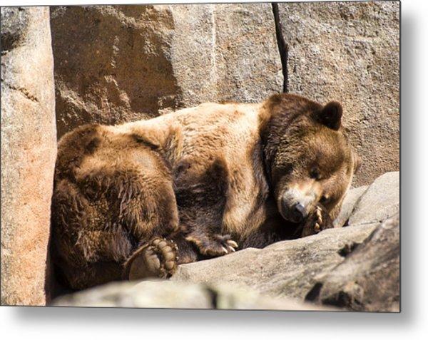Brown Bear Asleep Again Metal Print