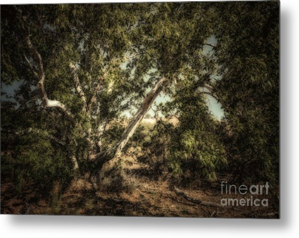Brown Canyon Sycamore - Toned Metal Print by Al Andersen