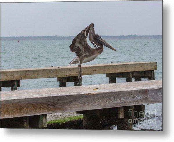 Brown Pelican 1 Metal Print