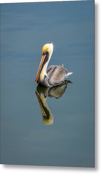 Brown Pelican Reflection Metal Print