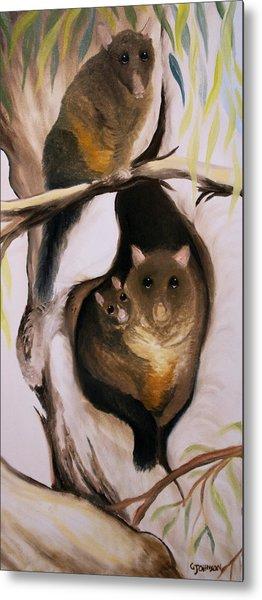 Brush Tail Possum Metal Print