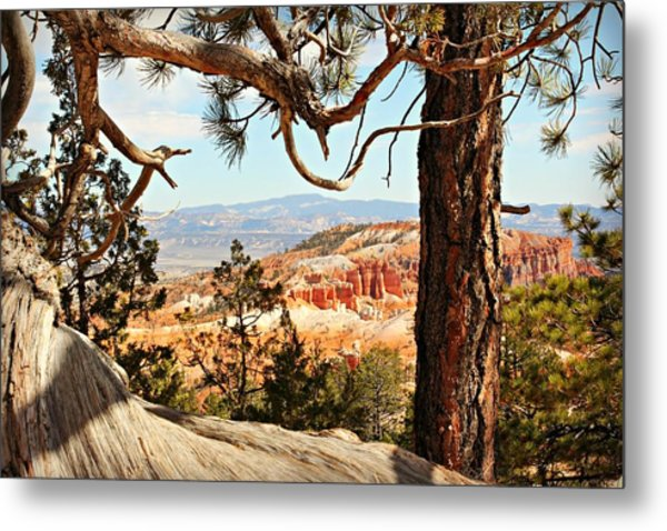 Bryce Canyon Through The Trees Metal Print