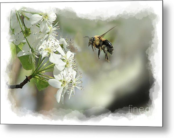 Bubble Bee Looking For Nectar Metal Print by Dan Friend