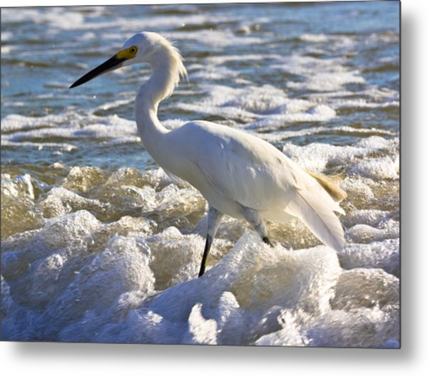 Bubbles Around Snowy Egret Metal Print