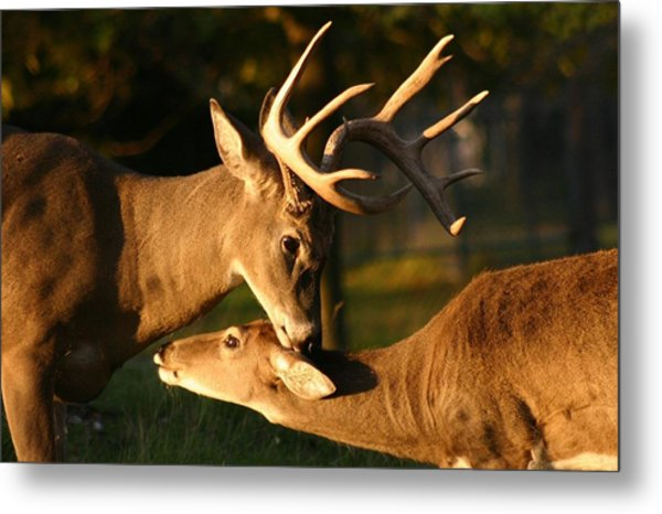 Buck And Friend Metal Print