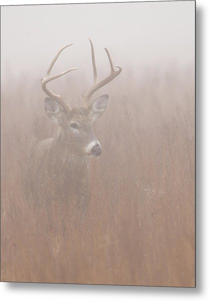 Buck In Fog Metal Print
