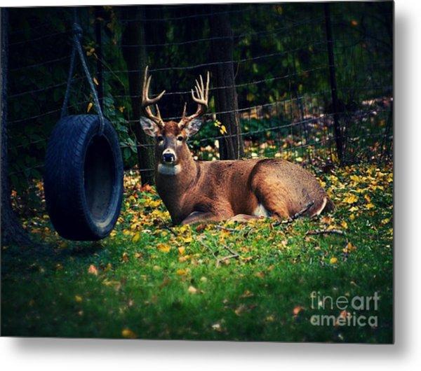 Buck In The Back Yard Metal Print