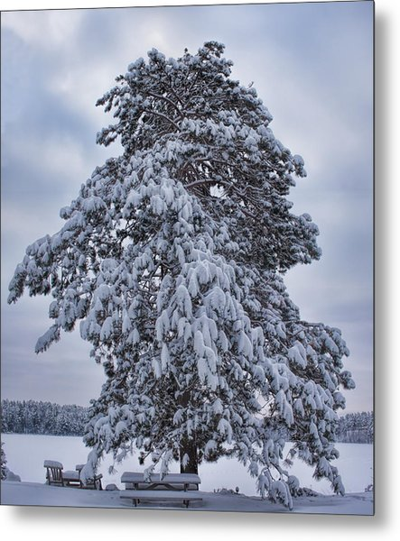 Buck Lake Flocked Pine Metal Print