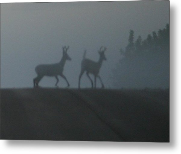 Bucks In Fog Metal Print